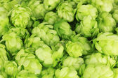 Fresh green hops, close up — Stock Photo