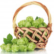 Stock Photo: Fresh green hops in wicker basket, isolated on white