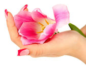 Closeup of hands of young woman with elegance manicure and tulip flower, isolated on white — Stock Photo