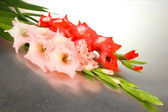 Beautiful gladiolus flower close up — 图库照片