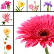 Stock Photo: Collage of beautiful flowers isolated on white