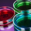 Color liquid in petri dishes on violet background — Stock Photo