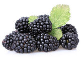 Sweet blackberries isolate on white — Stock Photo