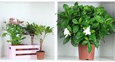 Piękne kwiaty w doniczkach na białe półki z bliska — Zdjęcie stockowe