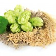 Fresh green hops and barley, isolated on white — Stock Photo
