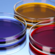 Stock Photo: Color liquid in petri dishes on blue background