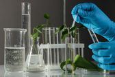 Test tubes with plant on gray background — Stock Photo
