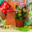 Stock Photo: Transplant flowers in pots close-up