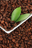Coffee beans on plate close-up — Foto Stock