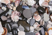 Close up of sea stones and shells — Stock Photo