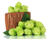 Fresh green hops in wooden vase, isolated on white — Stock Photo