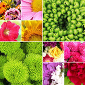 Collage of beautiful flowers — Stock Photo
