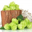 Stock Photo: Fresh green hops in wooden vase, isolated on white