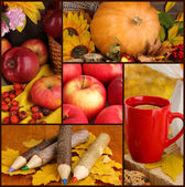 Collage of beautiful autumn — Stock Photo