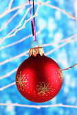 Christmas toy hanging on branch on blue background — Stock Photo