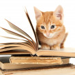 Cute little red kitten and books isolated on white — Stock Photo #31904885