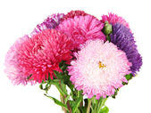 Bright aster flowers, isolated on white — Stockfoto