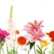 Beautiful flowers isolated on white — Stock Photo #31930065