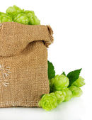 Fresh green hops in burlap bag, isolated on white — Stock Photo