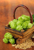 Fresh green hops in basket and barley, on wooden background — Stock Photo