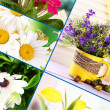 Stock Photo: Collage of beautiful flowers