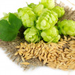 Stock Photo: Fresh green hops and barley, isolated on white