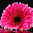 Beautiful pink gerbera flower on black background — Stock Photo #32217627