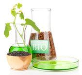 Fotografía conceptual de bio combustible. aislado en blanco — Foto de Stock