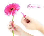 Woman hands guesses on pink gerbera, isolated on white — Stock Photo