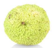 Osage orange frukt (maclura pomifera), isolerad på vit — Stockfoto