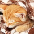 Cute little red kitten sleeps in plaid close up — Stock Photo #32220375