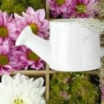 vackra vita och lila blommor med vattenkanna i trälåda närbild — Stockfoto
