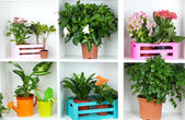 Beautiful flowers in pots on white shelves close-up — Stock Photo