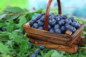 Blueberries in wooden basket on grass on nature background — Stockfoto
