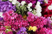 Beautiful summer flowers close-up background — Photo