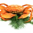 Boiled crab isolated on white — Stock Photo #32336769