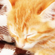 Cute little red kitten sleeps in plaid close up — Stock Photo #32339885
