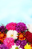 Beautiful bouquet of chrysanthemums on bright background — Stok fotoğraf