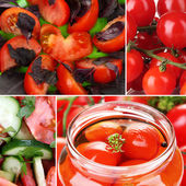 Collage of tomatoes — Stock Photo