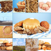 Bread and harvesting wheat collage — Stockfoto