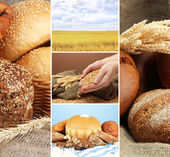 Bread and harvesting wheat collage — Photo