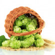 Stock Photo: Fresh green hops in wicker basket and barley, isolated on white