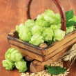 Stock Photo: Fresh green hops in basket and barley, on wooden background