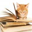 Cute little red kitten and books isolated on white — Stock Photo #32504985