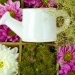 Beautiful white and purple flowers with watering can in wooden box close-up — Stock Photo