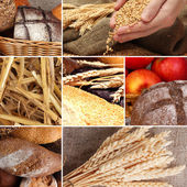 Bread and harvesting wheat collage — Stock fotografie