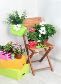 Many beautiful flowers on chair in room close-up — Stock Photo