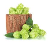 Fresh green hops in wooden vase, isolated on white — Stock Photo