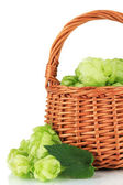 Fresh green hops in wicker basket, isolated on white — Stock Photo