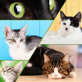 Collage from several cats — Stock Photo